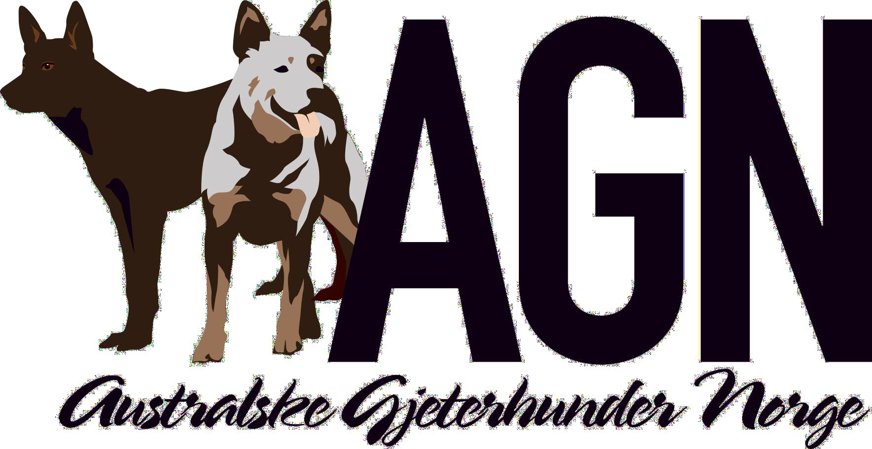 Australske Gjeterhunder Norge